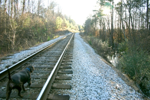 The current CSX track that is the path for the future Georgia Brain Train. To the right is Burnt Fork Creek, so the parallel commuter rail would be built on the lefthand side (where I could wave to the riders from my living room).