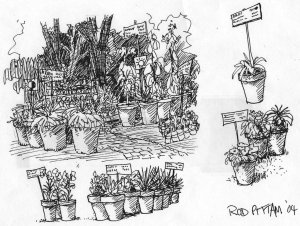 Pen and ink sketch of native plants for sale