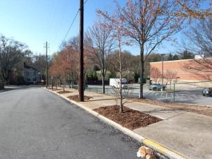 Another planting by Trees Atlanta on Cleburne Terrace in Poncey-Highland