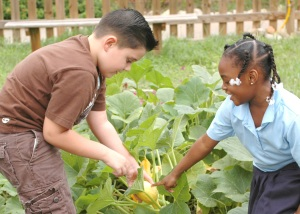 Decatur kids checking out the yellow summer squash in their garden at Medlock Elementary School (photo courtesy of the Medlock website)