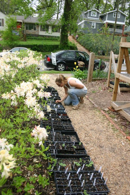 Picking out cow peas, longneck squash, and more to plant in our vegetable garden