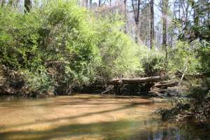 Mason Mill and Ira B. Melton Parks, near Medlock Park in DeKalb County, make up a 130+ acre park where Burnt Fork Creek and the South Fork of the Peachtree Creek intersect