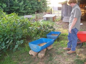 Gabel surveying the 55 gallon drum he just cut in half to use for a vermicomposting bin.