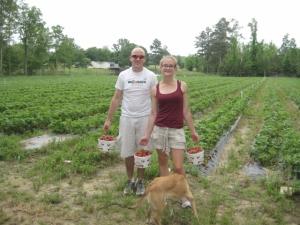 Strawberry picking Georgia at LCCL Strawberry farm near Atlanta