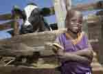 Find out how you can get involved with the Heifer project in Atlanta GA