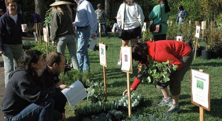 Fernbank Plant Sale - photo by Rob Holland